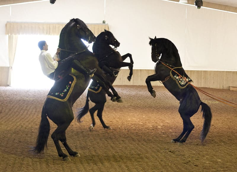 show cheval minorquin