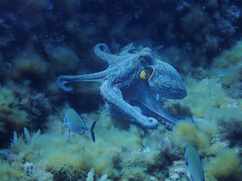 Dic7 | Une Plongée En Pleine Réserve Marine ? Diving Fornells Sans Hésiter | Bons Plans Minorque
